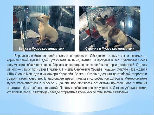 Вернулись собаки из полёта живые и здоровые. Обходились с ними как с героями...