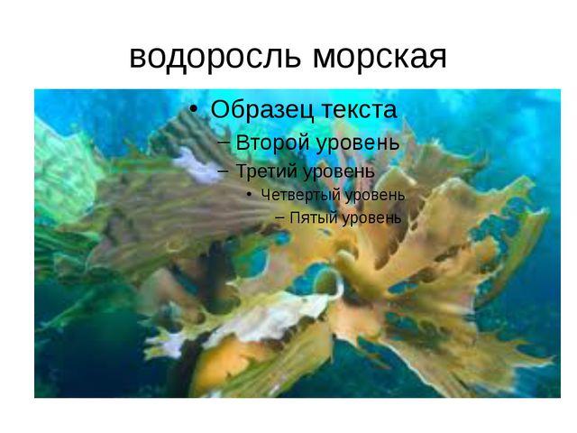водоросль морская