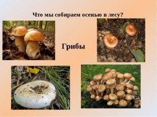 Что мы собираем осенью в лесу? Грибы