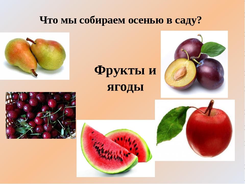 Что мы собираем осенью в саду? Фрукты и ягоды