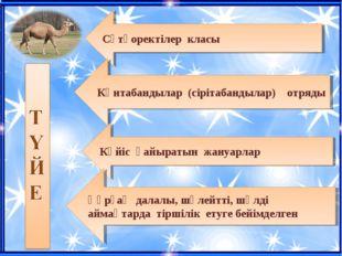 Сүтқоректілер класы Көнтабандылар (сірітабандылар) отряды Күйіс қайыратын жан