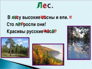 В лесу высокие сосны и ели. Сто лет росли они! Красивы русские леса. е е е е
