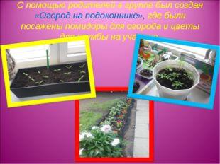 С помощью родителей в группе был создан «Огород на подоконнике», где были пос