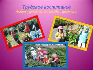 Трудовое воспитание Любим трудиться в огороде и цветнике.