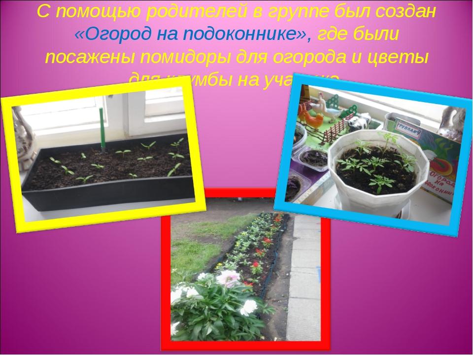 С помощью родителей в группе был создан «Огород на подоконнике», где были пос...