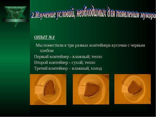 ОПЫТ №1 Мы поместили в три разных контейнера кусочки с черным хлебом Первый к...
