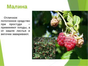 Малина Отличное потогонное средство при простуде – применяют плоды, а от ка