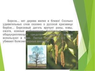 Береза… нет дерева милее и ближе! Сколько удивительных слов сказано о русско