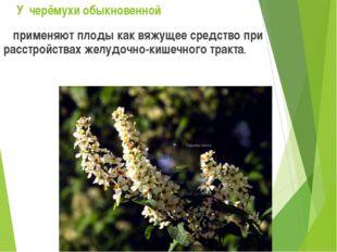 У черёмухи обыкновенной применяют плоды как вяжущее средство при расстройства