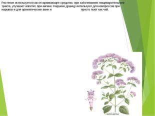 Растение используется как отхаркивающее средство, при заболеваниях пищеварите