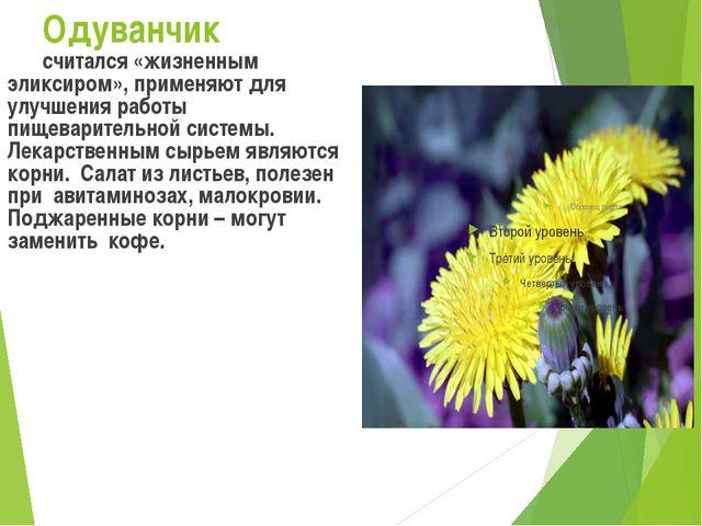 Одуванчик считался «жизненным эликсиром», применяют для улучшения работы пищ...