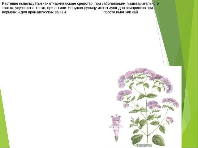 Растение используется как отхаркивающее средство, при заболеваниях пищеварите...