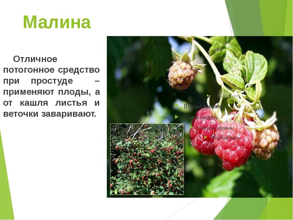 Малина Отличное потогонное средство при простуде – применяют плоды, а от ка...
