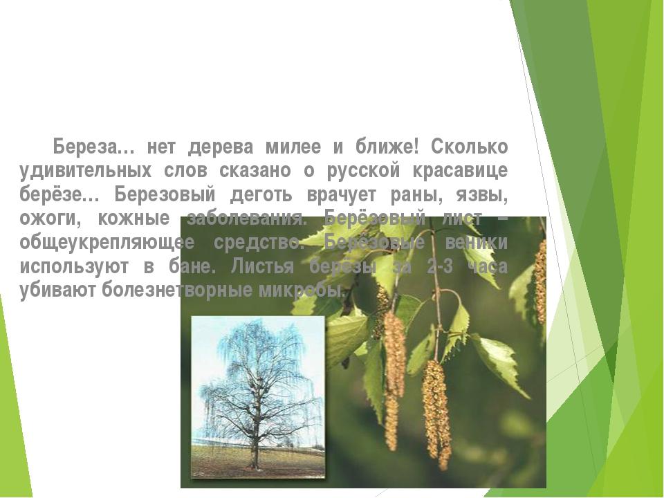 Береза… нет дерева милее и ближе! Сколько удивительных слов сказано о русско...