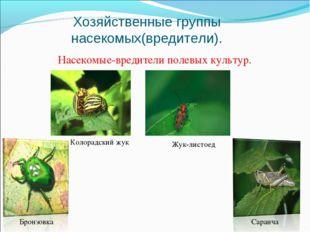 Хозяйственные группы насекомых(вредители). Насекомые-вредители полевых культу