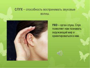 СЛУХ – способность воспринимать звуковые волны. УХО – орган слуха. Слух позво