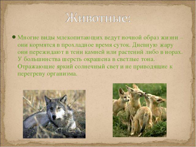 Многие виды млекопитающих ведут ночной образ жизни – они кормятся в прохладно...