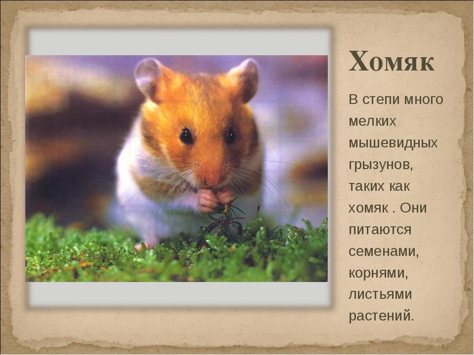 Хомяк В степи много мелких мышевидных грызунов, таких как хомяк . Они питаютс...