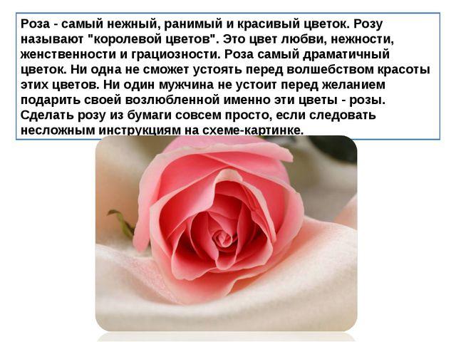 """Роза - самый нежный, ранимый и красивый цветок. Розу называют """"королевой цвет..."""