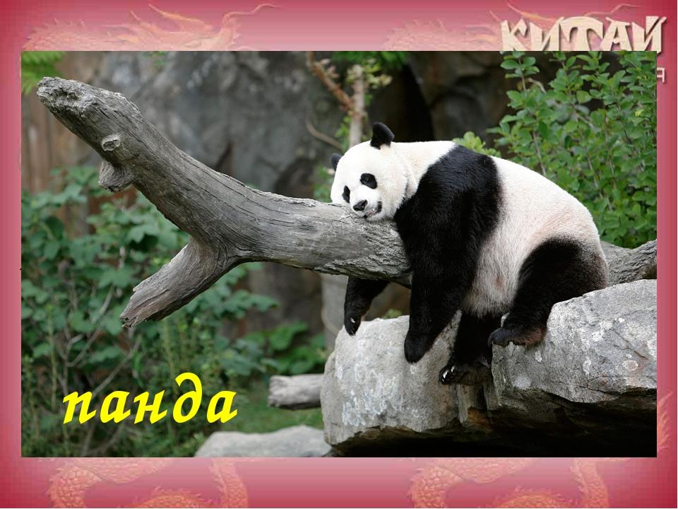 Назовите животное, очень любимое в Китае и во всем мире! панда