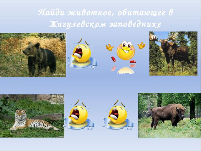 Найди животное, обитающее в Жигулевском заповеднике