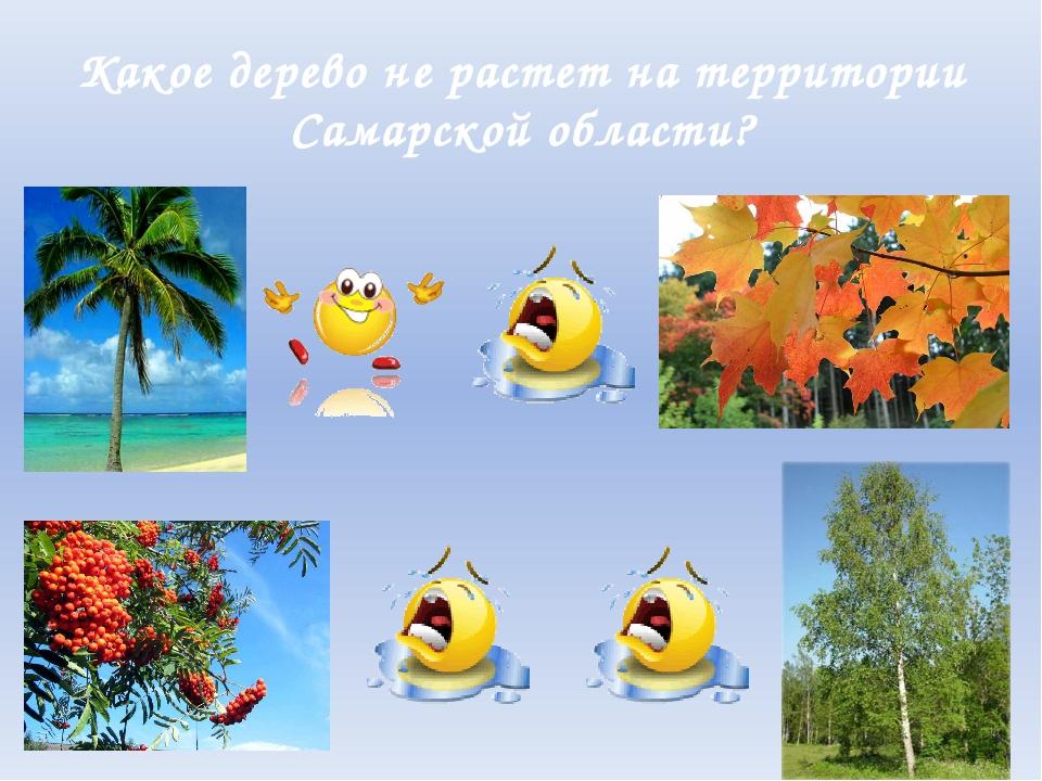 Какое дерево не растет на территории Самарской области?