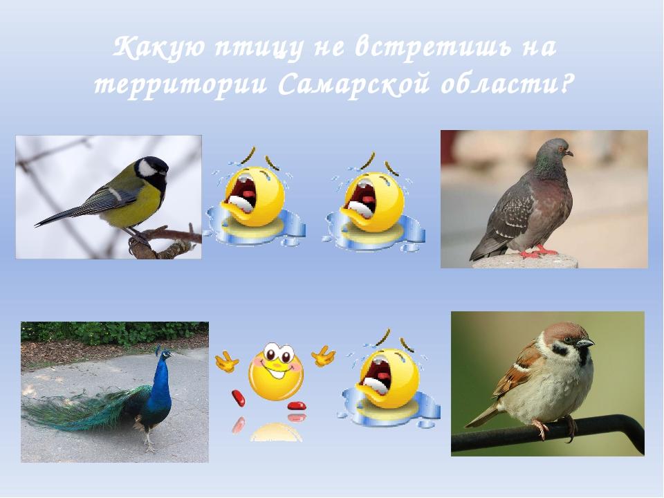 Какую птицу не встретишь на территории Самарской области?