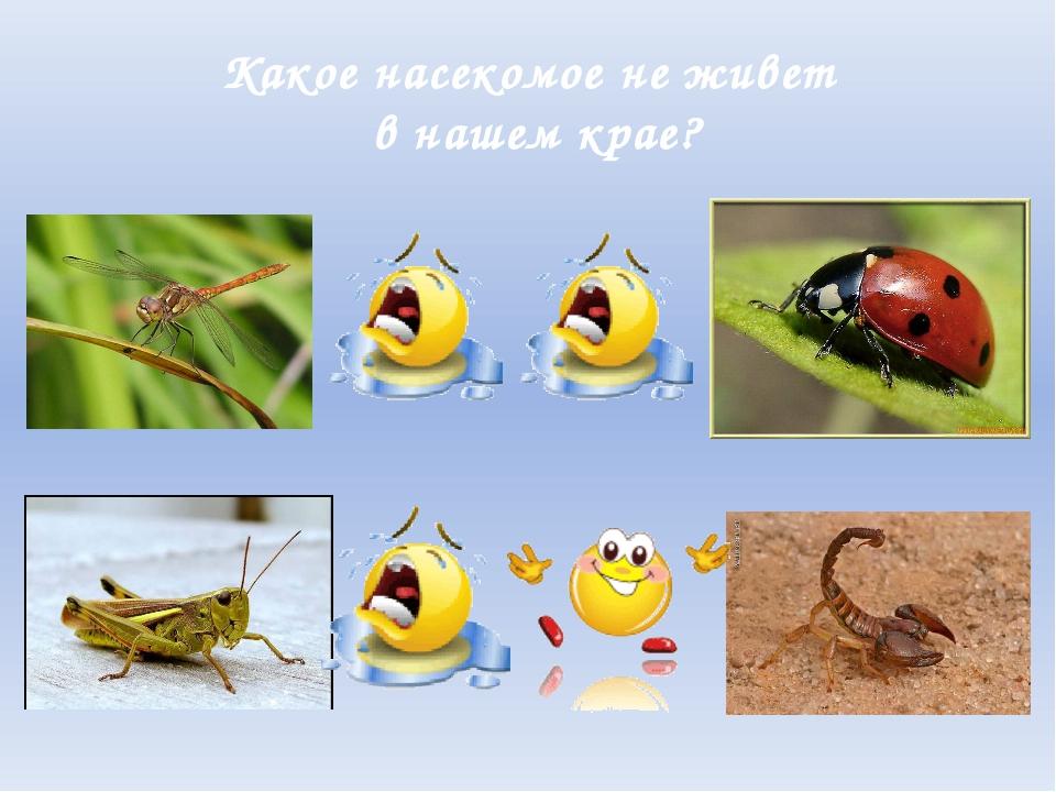 Какое насекомое не живет в нашем крае?