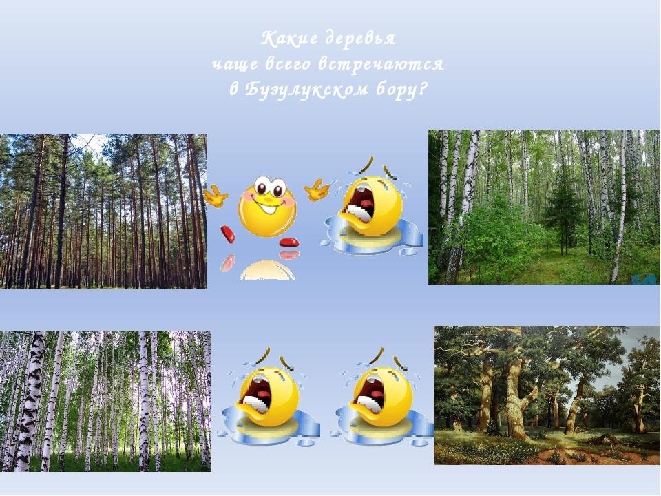 Какие деревья чаще всего встречаются в Бузулукском бору?