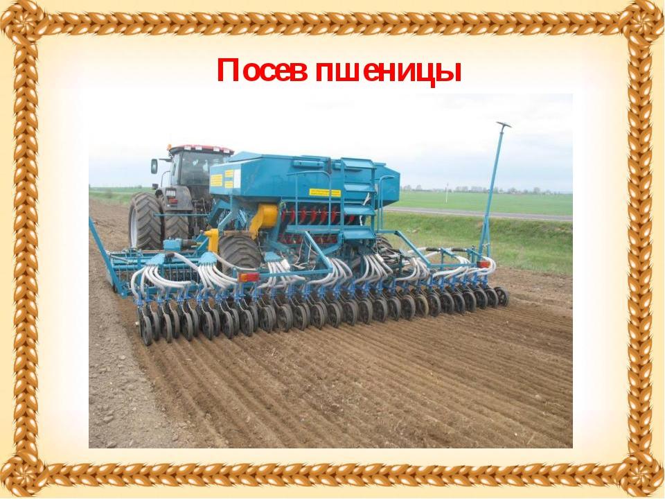 Посев пшеницы
