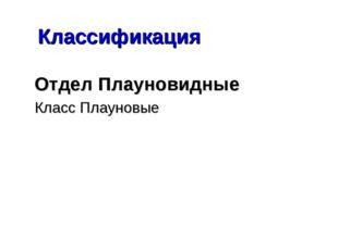 Классификация Отдел Плауновидные Класс Плауновые