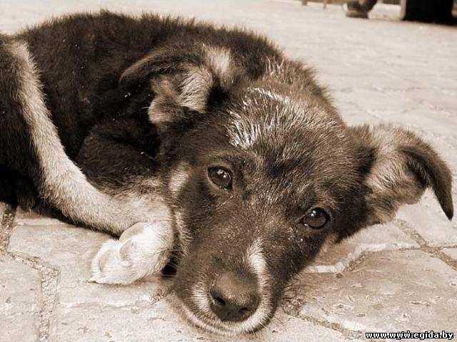 Тольяттинские и самарские чиновники отправятся сегодня в приют для бездомных животных - Радио Август - Главное