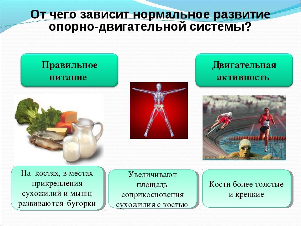 От чего зависит нормальное развитие опорно-двигательной системы? На костях, в...