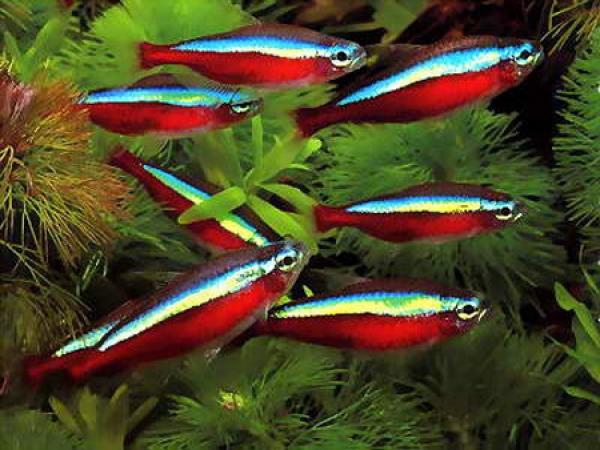 Виды аквариумных рыбок которые были, есть или будут у Вас ( только фото с описанием) - ГЛАВНЫЙ ЖЕНСКИЙ ФОРУМ СТРАНЫ