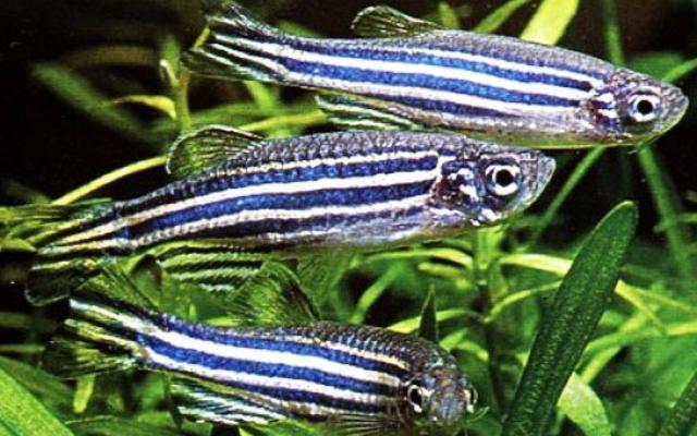 Акварист - новости аквариумистики Ассоциация Аквариумистов Израиля. - Part 3