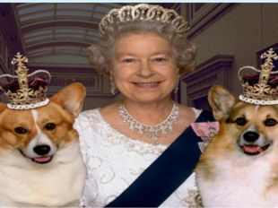 What are the Queen's favourite pets? Cats; horses; dogs.