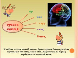 У людини є п'ять органів чуття. Органи чуття дають організму інформацію про н