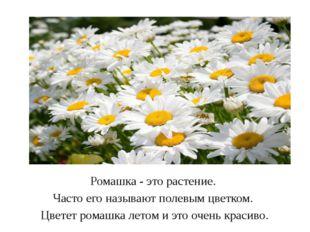 Ромашка - это растение. Часто его называют полевым цветком. Цветет ромашка л