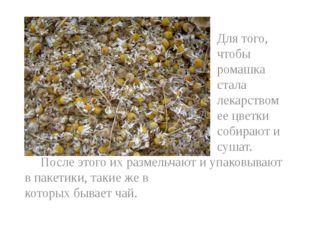 Для того, чтобы ромашка стала лекарством ее цветки собирают и сушат. После