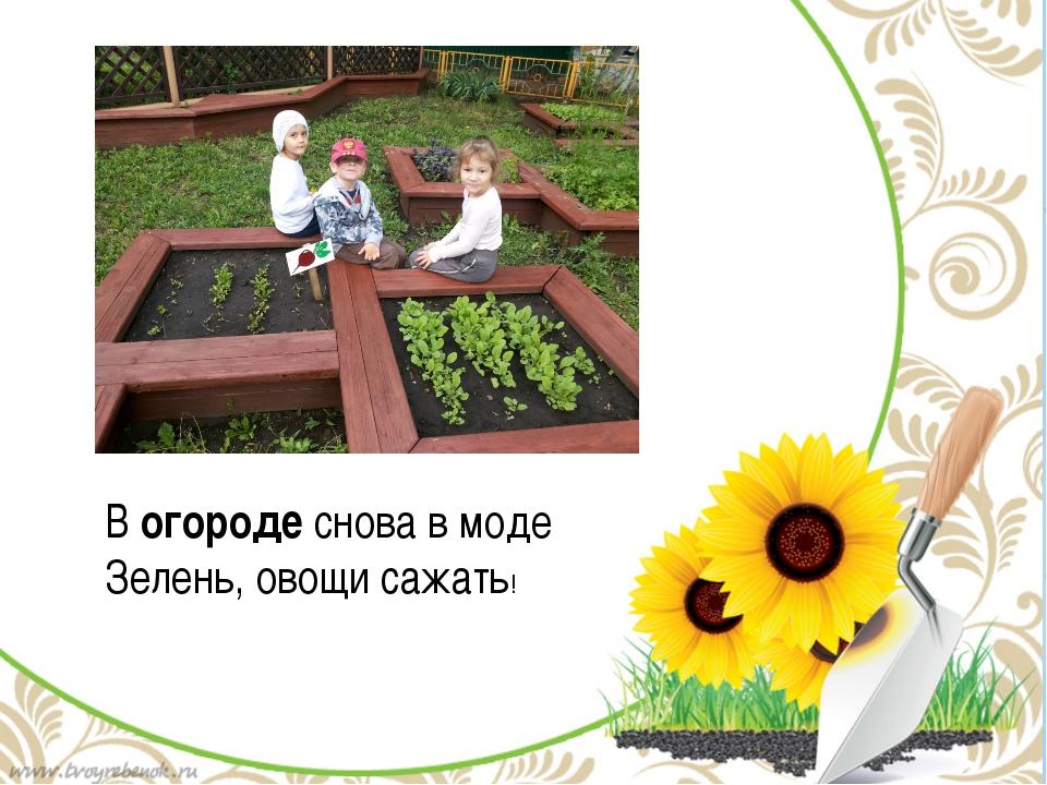 Вогородеснова в моде Зелень, овощи сажать!