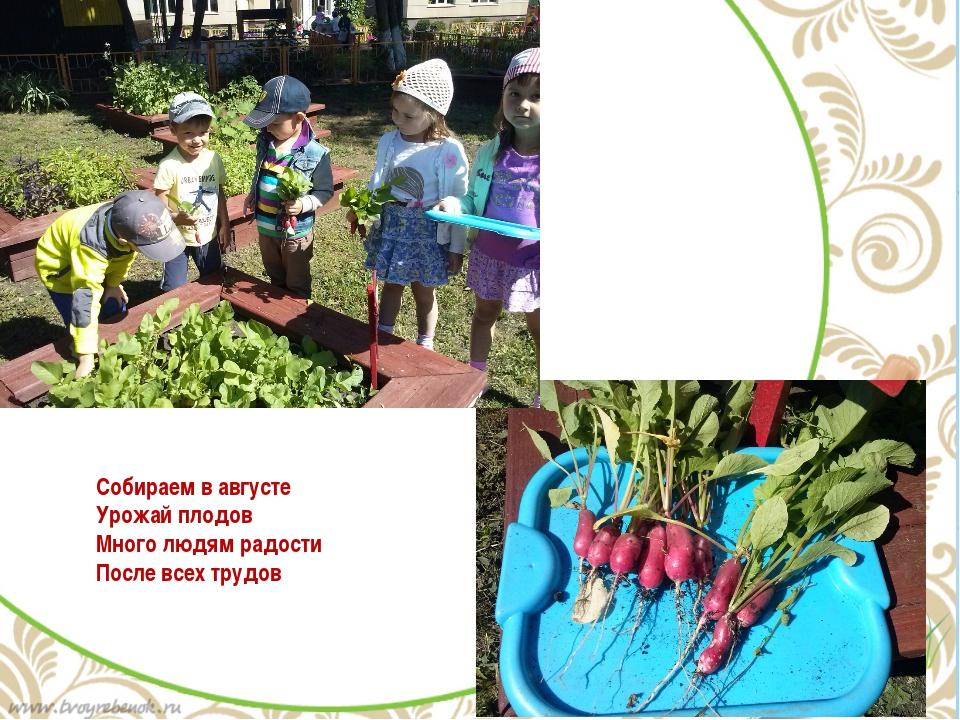 Собираем в августе Урожай плодов Много людям радости После всех трудов