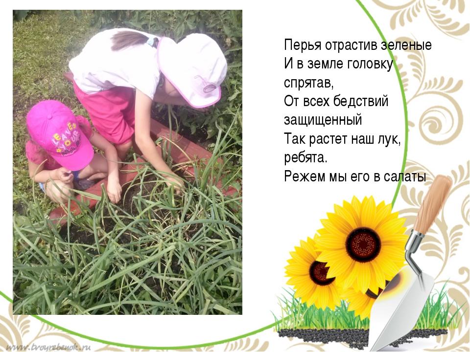 Перья отрастив зеленые И в земле головку спрятав, От всех бедствий защищенный...