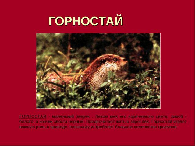 ГОРНОСТАЙ ГОРНОСТАИ - маленький зверек . Летом мех его коричневого цвета, зи...
