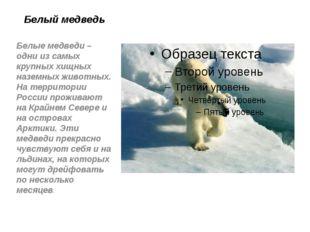 Белый медведь Белые медведи – одни из самых крупных хищных наземных животных.
