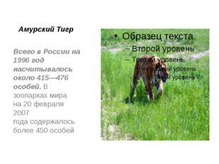Амурский Тигр Всего в России на 1996 год насчитывалось около 415—476 особей.