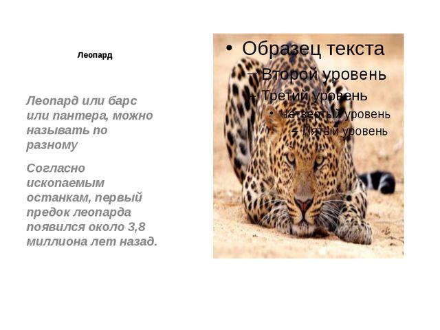 Леопард Леопард или барс или пантера, можно называть по разному Согласно иско...