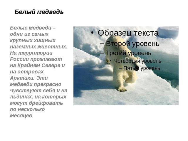 Белый медведь Белые медведи – одни из самых крупных хищных наземных животных....