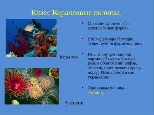 Класс Коралловые полипы. Актинии Кораллы Морские одиночные и колониальные фор