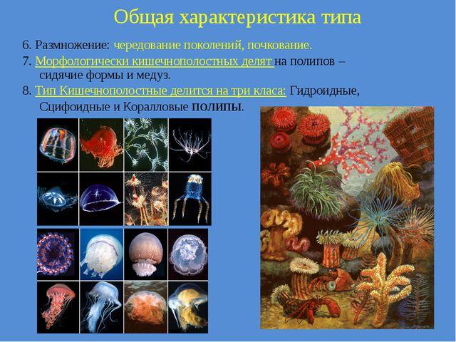 6. Размножение: чередование поколений, почкование. 7. Морфологически кишечноп...