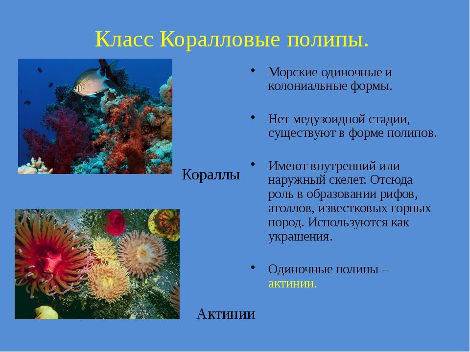 Класс Коралловые полипы. Актинии Кораллы Морские одиночные и колониальные фор...